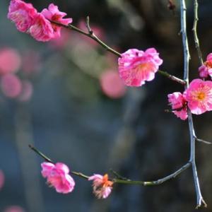 2月27日  御言葉をあなたへ   寒くても可愛く咲く
