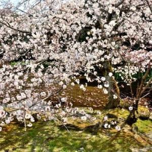 4月4日  御言葉をあなたへ    平安時代を忍ぶ