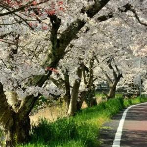 4月22日  御言葉をあなたへ   桜も散り