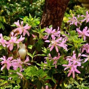 4月23日   御言葉をあなたへ    春の花