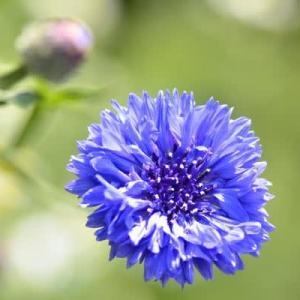 5月8日  御言葉をあなたへ   花の香