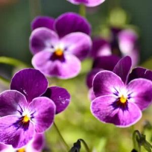 5月12日  御言葉をあなたへ    花粉や黄砂