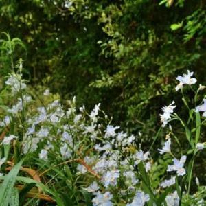 5月25日  御言葉をあなたへ   白い花