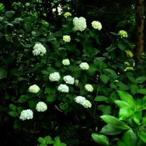 7月6日  御言葉をあなたへ    林の中の幻想