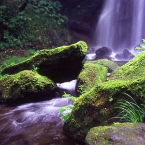 8月1日  御言葉をあなたへ  苔満ちた滝