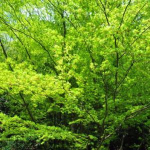 5月18日  御言葉をあなたへ  若葉の季節は過ぎ、梅雨へ