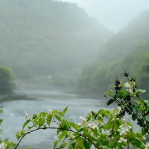 5月29日  御言葉をあなたへ  川霧