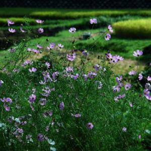 9月25日  御言葉をあなたへ   秋の野の花に思う