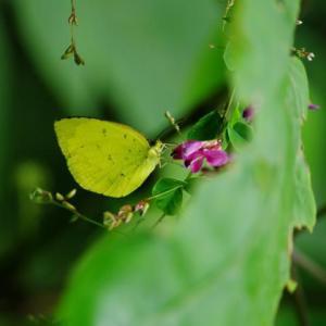 鳥や蝶がやってくる木や花を植えたい