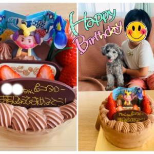 小太郎☆一歳の誕生日◇プレゼントと出会い。