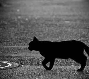 さすらいの黒い野良猫は今