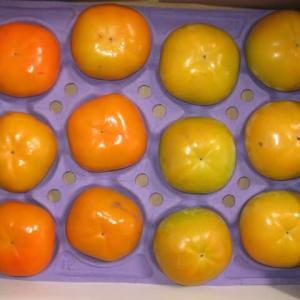 石岡市から太秋柿と貴秋柿の5キロセット届きました。