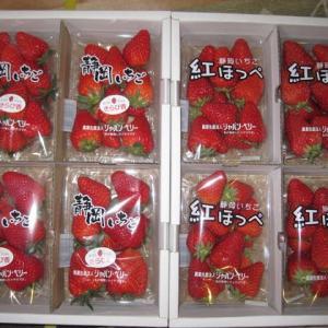藤枝市からイチゴいっぱい届きました。