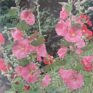 ネアンデルタール人の花