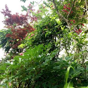 梅雨、緑映える季節に。