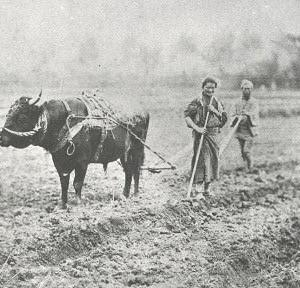 100年前の農村