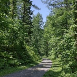 東川の山林案内