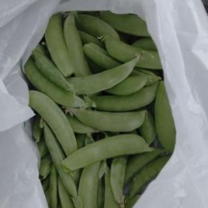 西神楽の案内 スナップエンドウ豆