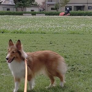 公園の草刈り