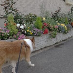 知犬と挨拶