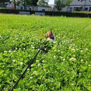 草 伸びすぎ の 公園