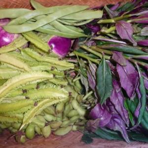 収穫野菜が