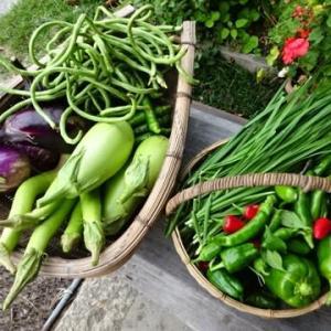 野菜の配達