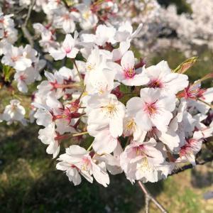 4月のご予約&お花に癒された日 ☆神戸 新長田 西代 プライベート 自宅エステ