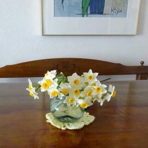 水仙の花とカボス