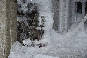 石仏977岩木山(青森)狛犬、地蔵菩薩