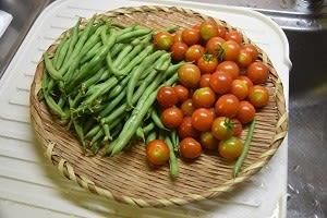 屋上菜園2021-08便利な小松菜