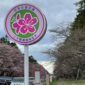 静内の二十間道路に桜を見に・・・寒すぎて30分で退散!