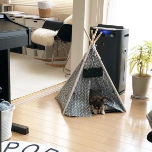 ティピーテント♪ペットもおしゃれなハウスで暮らす時代