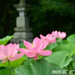 初夏の花、初夏の滝