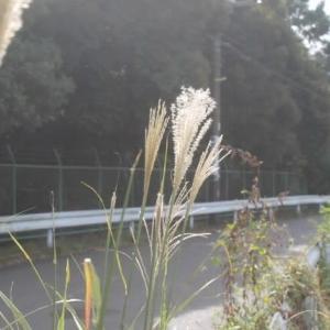 岡上散歩で見た景色