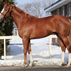 ミラグロッサの18馬名決定