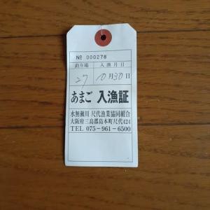 10/30(水) 水無瀬川 アマゴ釣り!!