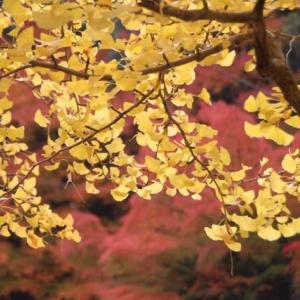 2019年 晩秋 Autumn Leaves / 枯葉