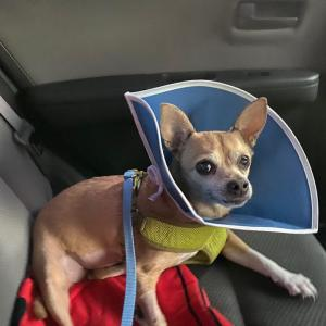 手術後4日目〜リナが退院しました