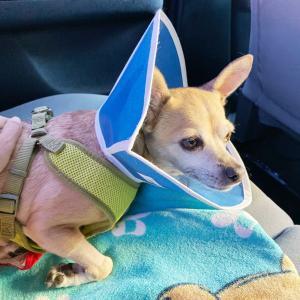 手術後6日目〜容態悪化、緊急病院へ