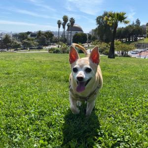 公園も隅々まで消毒が徹底されてスゴイ!〜愛犬とドッグパークへ