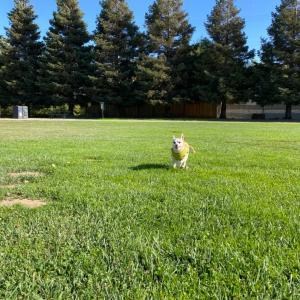 初めての公園で散歩