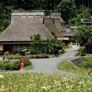 家の庭グリーンカーテン