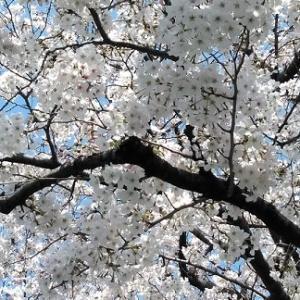 春の麗の・・・・
