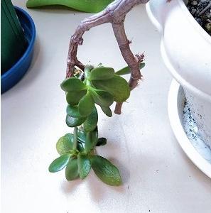 生に前向きな「金の成る木」