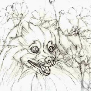 途中経過1 下描き1(秋桜と犬)