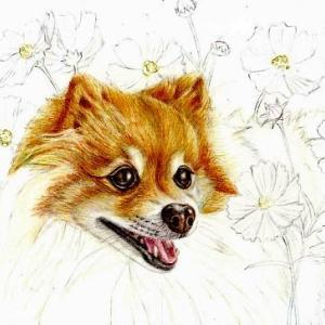 途中経過4 (秋桜と犬)