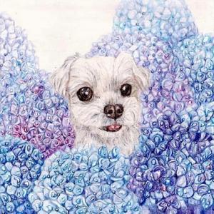 途中経過9 (紫陽花と犬)