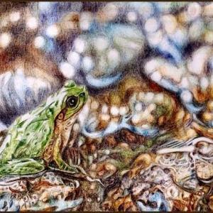 色鉛筆画540 (河原のカエル)