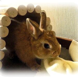 新しいおもちゃ・トンネル & あくび ~うさぎのちっち~